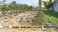 破坏绿化要修路 引来村民质疑