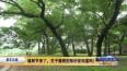 植树节来了,关于植树的知识你知道吗?
