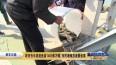 我市去年放流鱼苗1400多万尾 市民增殖放流需备案