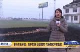 泰兴市张桥镇:秸秆焚烧 垃圾填河 污染情况不容忽视