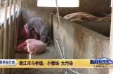 263泰州在行动:靖江市马桥镇:小猪场 大污染