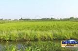 张余民:稻渔养殖效益高 勤劳致富益乡梓
