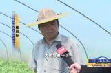 希望的田野·喜迎丰收节 兴化茅山:西瓜依然香甜 甜进农民心里