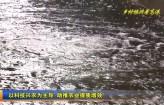 高港新聞2019-09-29HD