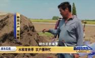 水稻育秧季 农户播种忙