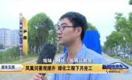 凤凰河景观提升 绿化工程下月完工