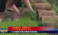 三台插秧机每天移栽百亩秧苗