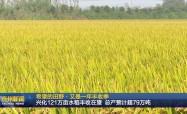 希望的田野·又是一年豐收季  興化121萬畝水稻豐收在望 總產預計超79萬噸