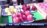 """旬邑""""马栏红""""苹果走进泰兴宣传周活动启动"""