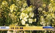 春暖賞花季 多彩油菜花扮靚鄉村