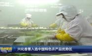 興化香蔥入選中國特色農產品優勢區
