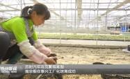 历时六年攻克繁殖难题   南京椴在泰兴工厂化培育成功