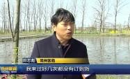 高港:睡蓮種苗熱銷 助力村民致富