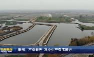 泰州:不負春光 農業生產有序推進