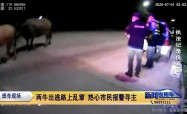 兩牛出逃路上亂竄 熱心市民報警尋主