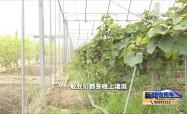 晴熱高溫天 農作物注意防曬抗旱