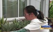 """靖江:社区打造""""空中花园"""" 促进邻里和谐"""
