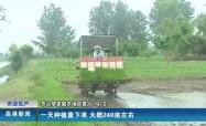 2021.6.22  农之梦家庭农场:抢抓农时忙插秧   科学施种保丰收