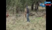 那个澳大利亚打袋鼠的事儿,袋鼠都懵了