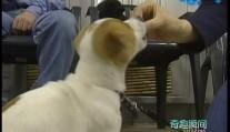 小狗训练学校