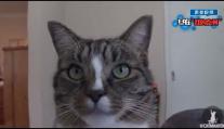 有种猫叫别人家的猫,看看别人家的猫技能max~~