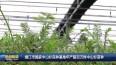 靖江市国家中山杉良种基地年产超百万株中山杉苗种