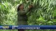 泰兴:八名大学生村官抱团创业助农富农