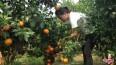 巧妇9妹家的水果为什么卖得那么好 也许这就是原因!