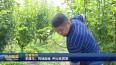 李建华:荒地刨金 种出优质梨