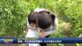 首个中国农民丰收节  姜堰:生态果园硕果飘香 自主采摘乐在其中VA0