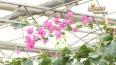 花粉过敏高峰来 元凶多为风媒花