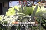 初冬花卉培育 要注意控水施肥
