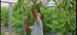 市委五届三次全会怎么看、怎么干 旭日丰家庭农场:创新谋出路   风吹果园香