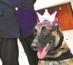公安局警犬集体过生日 吃特制蛋糕场面萌人