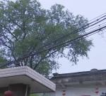 泰兴这人家房顶破损,瓦片掉落,是因为邻居家的树?