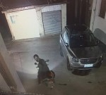 待產愛犬凌晨被偷,監控拍下偷狗人!