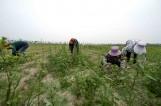 【视觉泰州】泰州蔡庄积极打造特色田园乡村建设