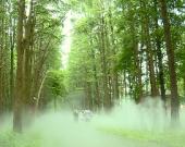 【泰州太美】兴化:梦里水乡 绿色生长