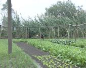 【走基层 看扶贫】姜堰白米昌桥:推行蔬菜订单模式 零散种植鼓了农民腰包