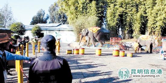 民族村内的大象表演。记者郭兴荣摄