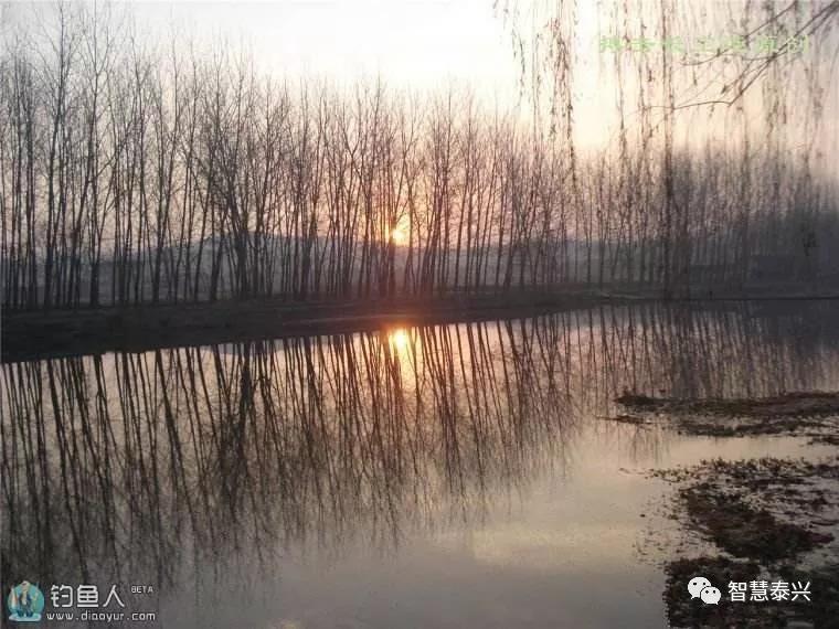 有一行柳树风景图