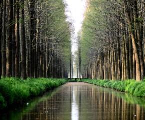 百集微視頻《發現泰州之美》第八集:水上森林