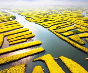 百集微视频《发现泰州之美》第二十集:千垛菜花