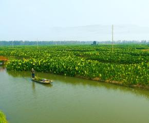 百集微視頻《發現泰州之美》第二十八集:芋香有緣