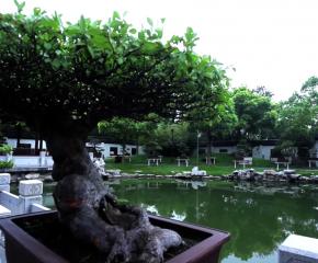 百集微視頻《發現泰州之美》第三十五集:盆收萬象納乾坤