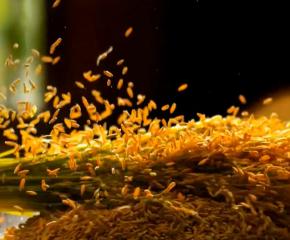 百集微视频《发现泰州之美》第三十四集:流水线上的美味