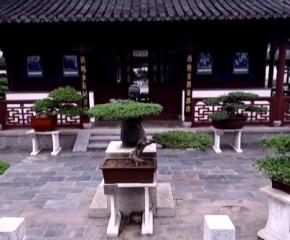 百集微视频《发现泰州之美》第三十五集:盆收万象纳乾坤