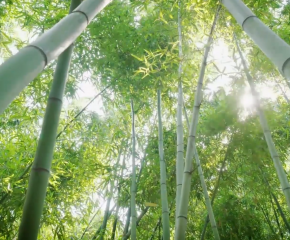 百集微視頻《發現泰州之美》第四十五集:竹趣