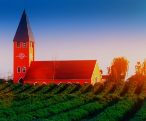 百集微視頻《發現泰州之美》第六十三集:十里花海十里景