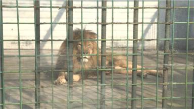 """阳光明媚02泰州市动物园动物扎堆""""日光浴"""""""